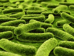 Dental plaque bacteria adhering to tooth surface and causing dental caries.