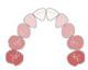Diagramme de l'arcade dentaire primaire ou temporaire.