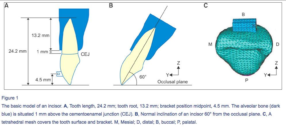inclinaison-incisive-os-alveolaire